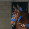 Anothertwistafate<br /> Keeneland morning scenes at Keeneland<br />  on April 11, 2019 in Lexington, Ky.
