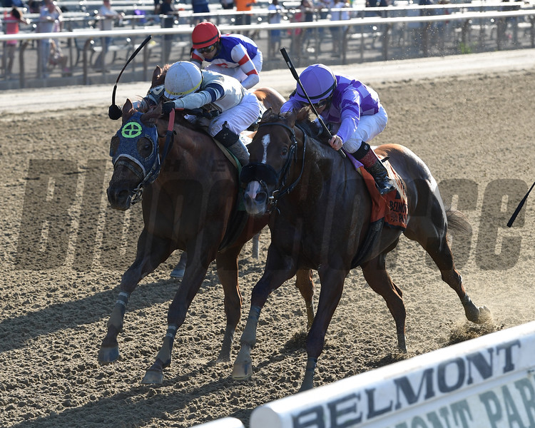 Pat On the Back wins the Commentator Stakes Monday, May 27, 2019 at Belmont Park. Photo: Coglianese Photos/Joe Labozzetta
