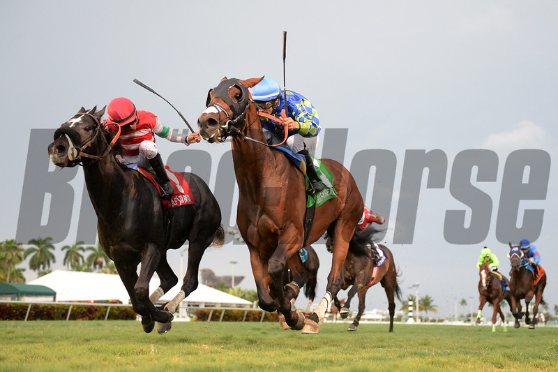 Vow Me Now wins the English Channel Stakes Saturday, May 5, 2019 at Gulfstream Park. Photo: Coglianese Photos/Lauren King
