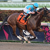 Blamed wins the 2019 Royal Delta Stakes at Gulfstream Park<br /> Coglianese Photos/Lauren King