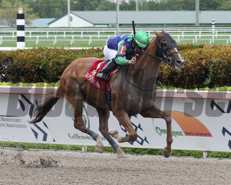 Royal Squeeze wins the Big Drama Stakes Saturday, May 11, 2019 at Gulfstream Park. Photo: Coglianese Photos/Andie Biancone
