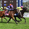 Offering Plan wins the 2019 West Point Stakes at Saratoga<br /> Coglianese Photos