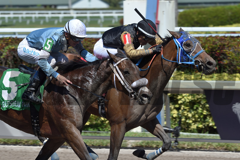 Brunette Princess and Miss Marcela deadheat in the 2019 Any Limit Stakes at Gulfstream Park.<br /> Coglianese Photos/Lauren King