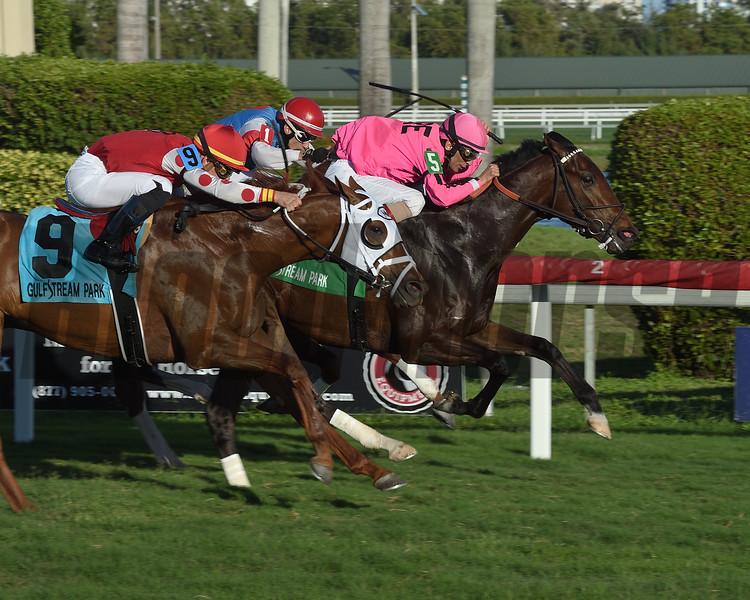 Casa Creed wins the 2019 Kitten's Joy Stakes at Gulfstream Park<br /> Coglianese Photos/Leslie Martin