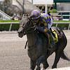 Garter and Tie wins the 2019 Ocala Stakes at Gulfstream Park<br /> Coglianese Photos/Cris Morales