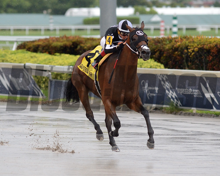 Lady's Island wins 2019 Nicole's Dream Stakes at Gulfstream Park. Photo: Coglianese Photos/Ryan Thompson