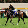 Loves Only You wins the Yushun Himba (Japanese Oaks) at Tokyo Racecourse. Photo: Naoji Inada