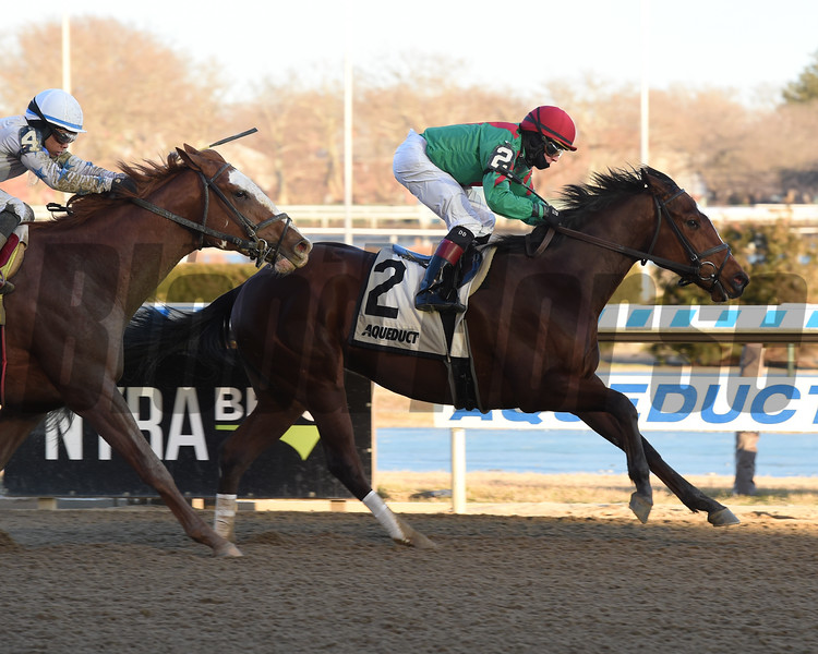 Blindwillie McTell wins the Rego Park Stakes at Aqueduct Sunday, January 13, 2019. Photo: Coglianese Photos/Chelsea Durand