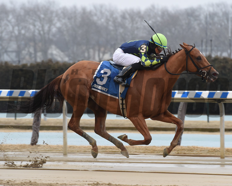 Divine Miss Grey wins 2019 Heavenly Prize Stakes at Aqueduct. Photo: Coglianese Photos/Elsa Lorieul