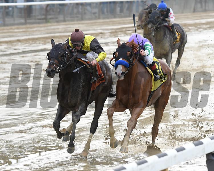 Nicodemus wins the 2019 Westchester Stakes<br /> Coglianese Photos/Annette Jasko