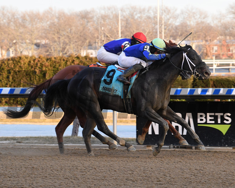 Honor Up wins the 2019 Say Florida Sandy Stakes at Aqueduct<br /> Coglianese Photos/Viola Jasko