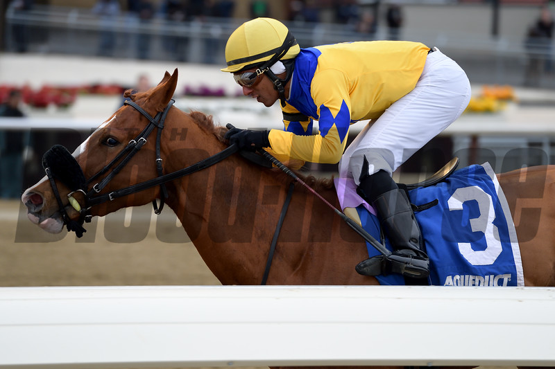 Stonesintheroad wins the 2019 Franklin Square Stakes at Aqueduct<br /> Coglianese Photos/Joe Labozzetta
