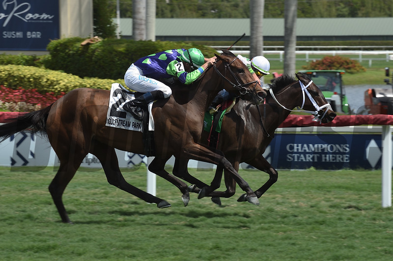 Trenchtown Cat wins the 2019 Sanibel Island Stakes at Gulfstream Park<br /> Coglianese Photos/Leslie Martin