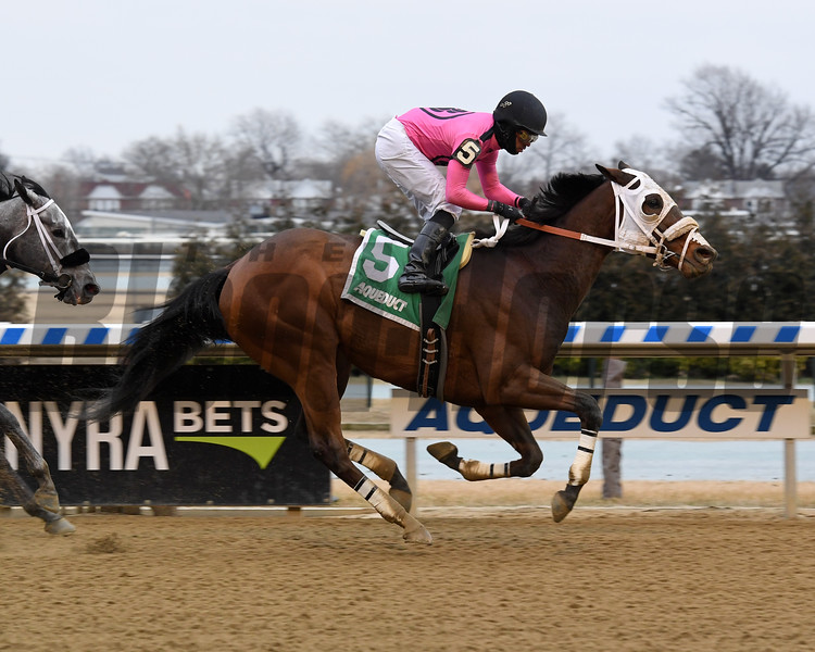 Solid Wager wins the 2019 Toboggan Stakes at Aqueduct<br /> Coglianese Photos/Chelsea Durand