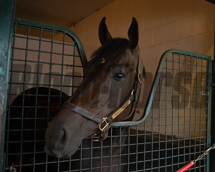 Proven Strategy<br /> at Woodbine.