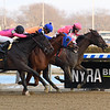 Tax wins the 2019 Withers Stakes at Aqueduct<br /> Coglianese Photos/Viola Jasko