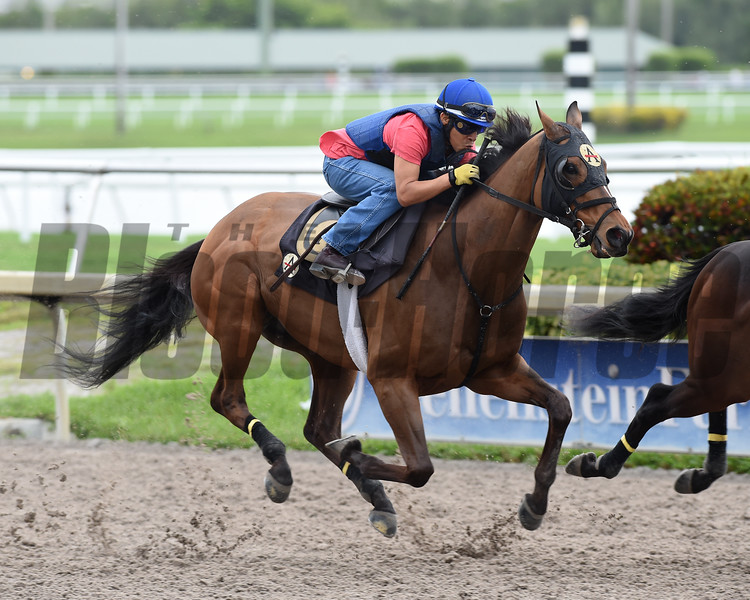 Something Awesome works in preparation for the Pegasus World Cup on 1-05-19 at Gulfstream Park with Edgar Prado up