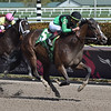 Quijote wins the 2019 Sunshine Millions Sprint Stakes at Gulfstream Park<br /> Coglianese Photos