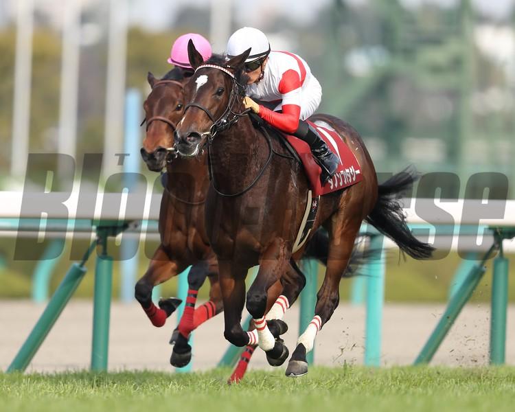 Danon Fantasy wins the 2019 Tulip Sho<br /> Masakazu Takahashi Photo