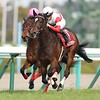 Danon Fantasy wins the 2019 Tulip Sho<br /> Masakazu Takahashi Photo