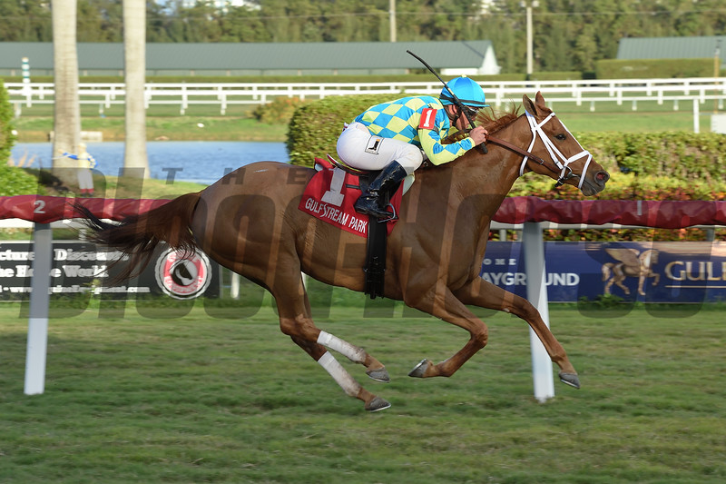 Bellavais wins the 2019 Marshua's River Stakes (G3T) at Gulfstream Park<br /> Coglianese Photos/Leslie Martin