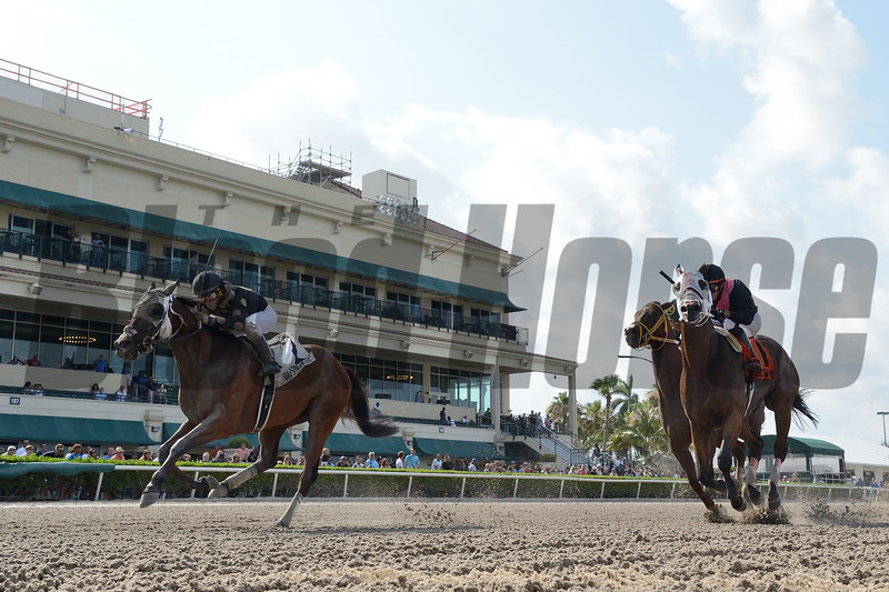 Fast Pass wins the Opening Lead Stakes Sunday, May 26, 2019 at Gulfstream Park. Photo: Coglianese Photos/Lauren King