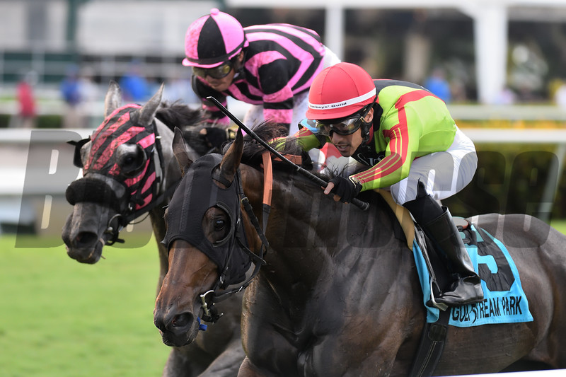 Lady Alida wins the 2019 Treasure Coast Stakes<br /> Coglianese Photos/Ryan Thompson
