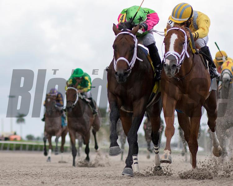 Ricki Ticki Taffi - Maiden Win, Gulfstream Park, August 25, 2019<br /> Coglianese Photos/Ryan Thompson