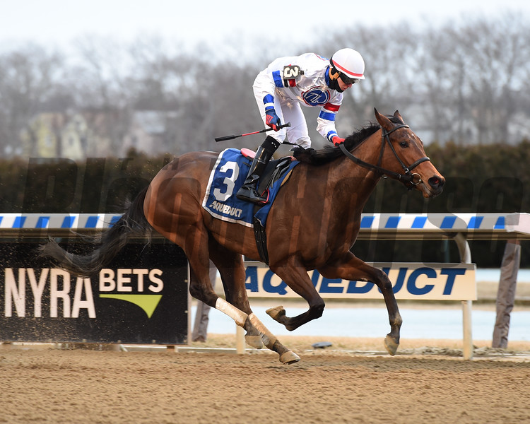 Ujjayi wins 2019 Ruthless Stakes at Aqueduct Sunday, January 27, 2019. Photos: Coglianese Photos/Elsa Lorieul