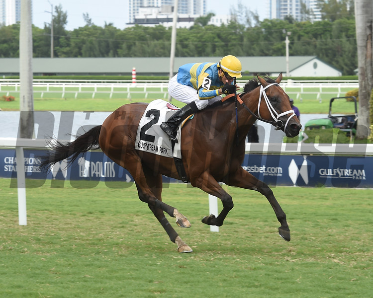 Cowboy's Hero wins the Mecke Stakes Sunday, July 7, 2019 at Gulfstream Park. Photo: Coglianese Photos/Lauren King