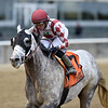 Marconi wins the 2019 Flat Out Stakes at Belmont Park<br /> Coglianese Photos/Chelsea Durand