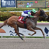 Royal Squeeze wins the Big Drama Stakes Saturday, May 11, 2019 at Gulfstream Park. Photo: Coglianese Photos/Lauren King