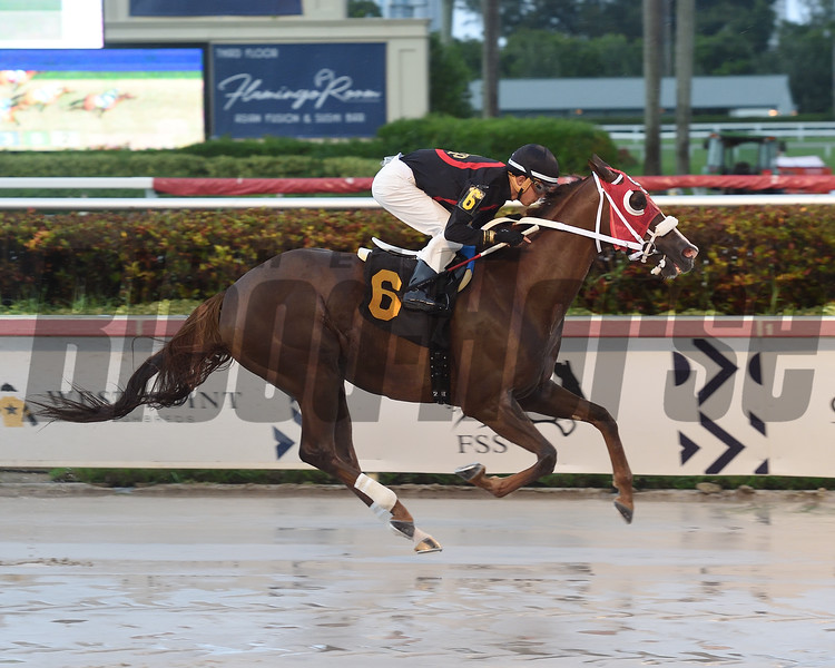 Front Loaded wins 2019 Allowance at Gulfstream Park. Photo: Coglianese Photos