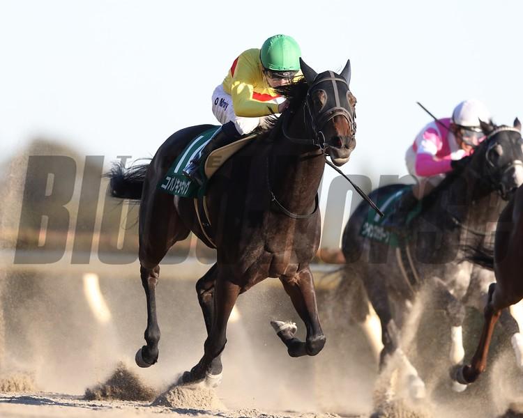 Copano Kicking wins 2019 Negishi Stakes. Photo: Masakazu Takahashi