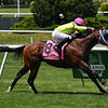 World of Trouble wins the 2019 Jaipur Invitational Stakes<br /> Coglianese Photos/Derbe Glass