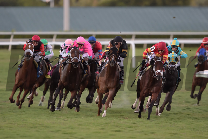 Zulu Alpha wins the 2019 Mac Diarmida Stakes at Gulfstream Park<br /> Coglianese Photos/Tim Sullivan