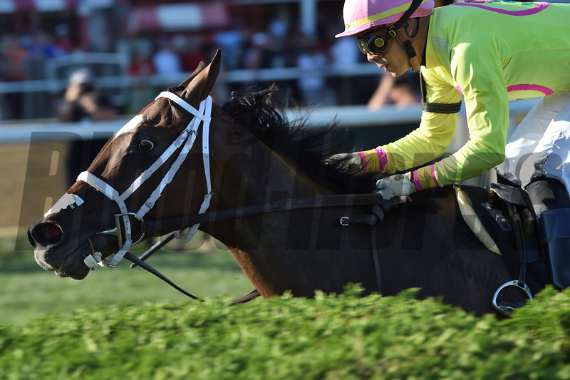 Shekky Shebaz wins the 2019 Lucky Coin Stakes at Saratoga<br /> Coglianese Photos/Elsa Lorieul