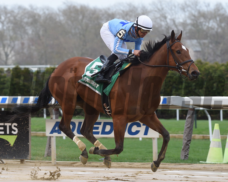 Newly Minted wins the New York Stallion Stakes Saturday, April 20, 2019 at Aqueduct. Photo: Coglianese Photos
