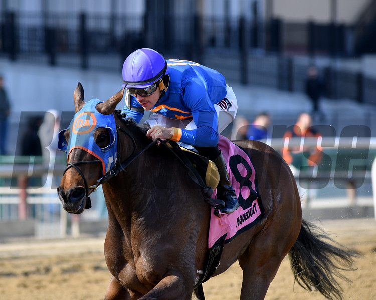 Daria's Angel wins the 2019 Sis City Stakes at Aqueduct<br /> Coglianese Photos/Elsa Lorieul