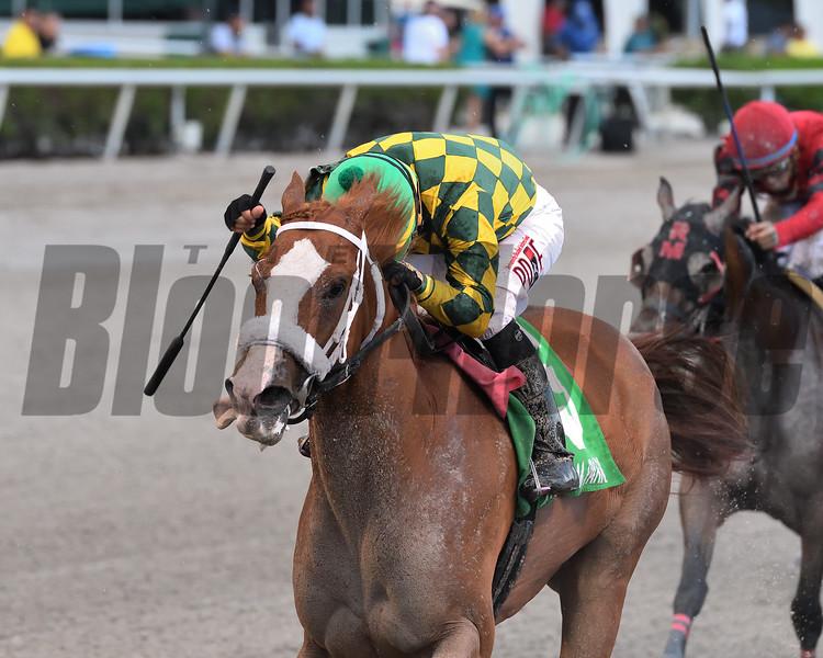 Ms Meshak wins the Added Elegance Stakes Saturday, July 27, 2019 at Gulfstream Park. Photo: Coglianese Photos/Ryan Thompson
