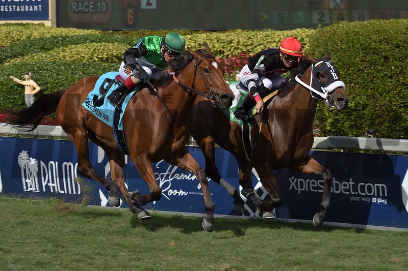 Valedictorian wins the 2019 Sand Springs Stakes at Gulfstream Park<br /> Coglianese Photos