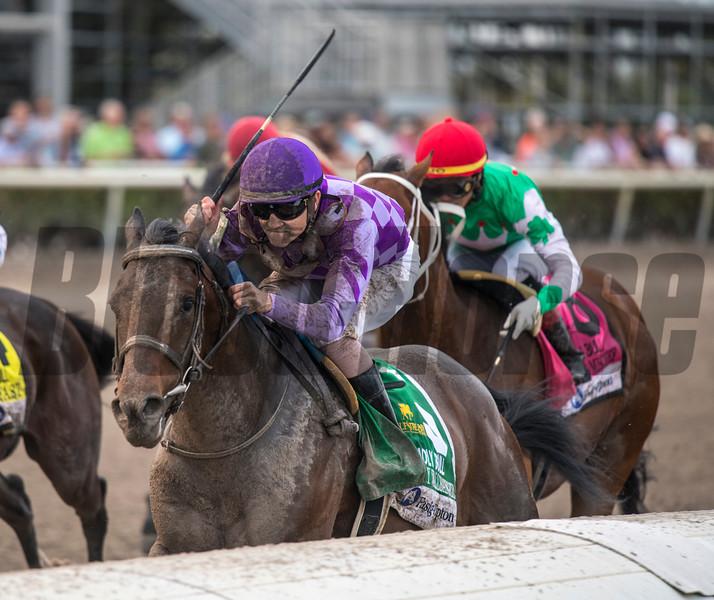 Harvey Wallbanger. Wins The Fasig Tipton Holy Bull Stakes @ Gulfstream Parkn  Feb 2 2019.  <br /> ©JoeDoiOrio/Winningimages.biz