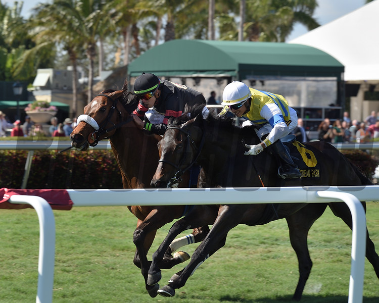 Holy Helena wins the 2019 The Very One Stakes at Gulfstream Park<br /> Coglianese Photos/Lauren KIng