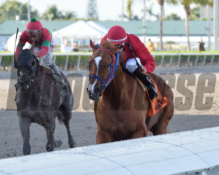 Gladiator King wins the 2019 Roar Stakes at Gulfstream Park<br /> Coglianese Photos/Cris Morales