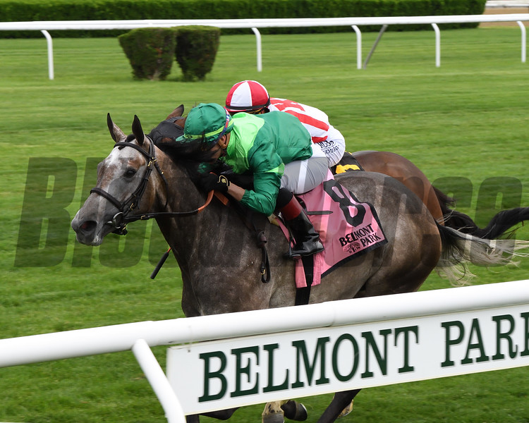 Homerique wins the 2019 New York Stakes at Belmont Park<br /> Coglianese Photos/Chelsea Durand