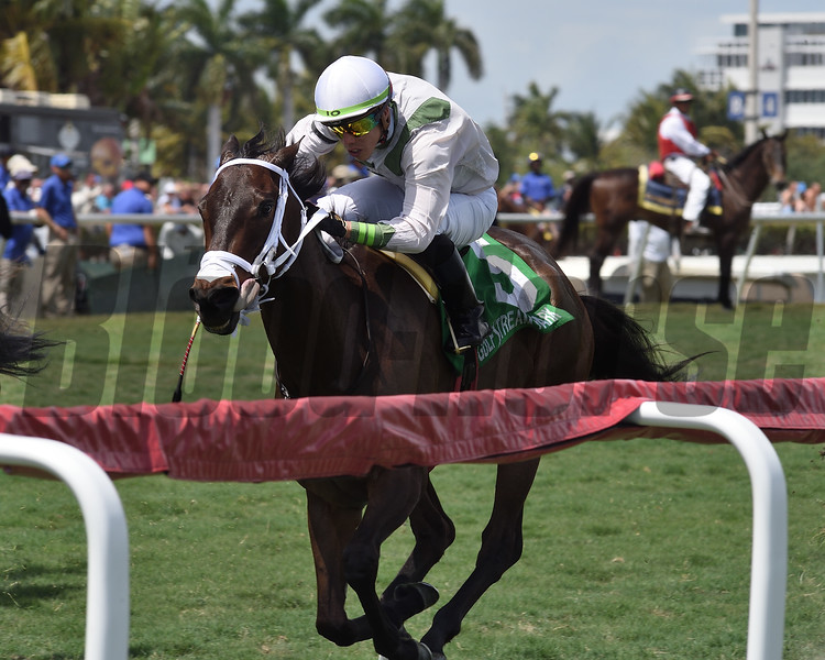 Trenchtown Cat wins the 2019 Sanibel Island Stakes at Gulfstream Park<br /> Coglianese Photos/Derbe Glass