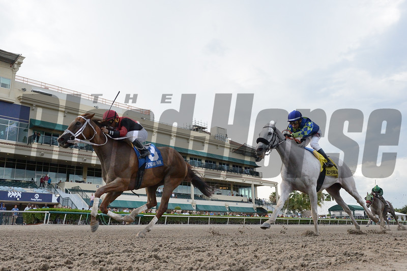 Hy Riverside wins the 2019 Big Red Stakes at Gulfstream Park<br /> Coglianese Photos/Lauren King