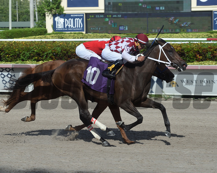 Charge Account - Maiden Win, Gulfstream Park, September 14, 2019<br /> Coglianese Photos/Lauren King