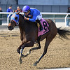 Daria's Angel wins the 2019 Sis City Stakes at Aqueduct<br /> Coglianese Photos/Joe Labozzetta