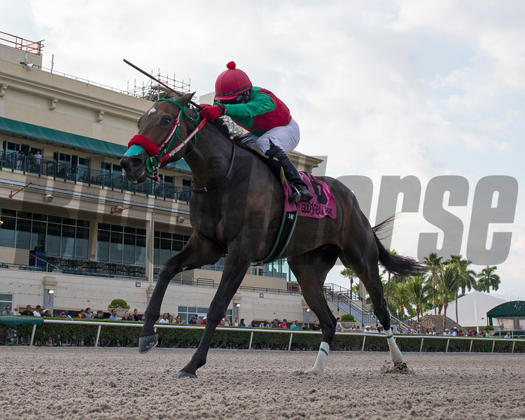 Wildwood's Beauty wins the 2019 Sheer Drama Stakes at Gulfstream Park<br /> Coglianese Photos/Ryan Thompson